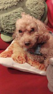 ベティ―ハートの看板犬